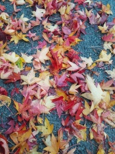 November's grounded leaves...